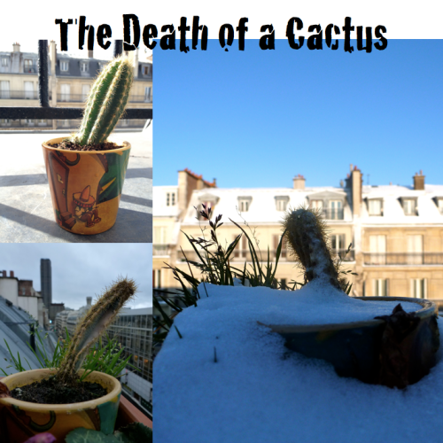 Death of a Cactus